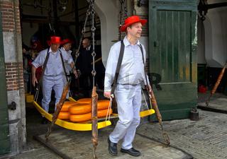 Käseträger tragen Käseräder auf einer Holzbahre von der Waage auf den Markt