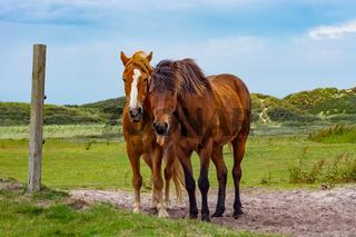 Lustiges Pferdebild