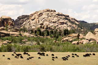 Wyoming Cattle Ranch Livestock Cows Beef Farm Rock Butte