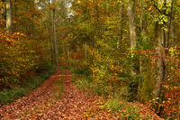 autumn; forest path;