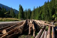 Wooden trunks in Chocholowska valley, West Tatra, Poland