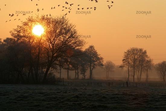 Entenflug im Sonnenuntergang