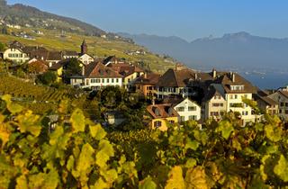 Winzerdorf Rivaz in den Weinbergen des Lavaux, Waadt, Schweiz