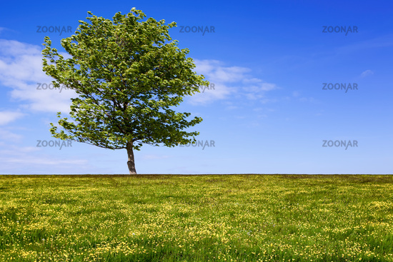 Green field with tree and cloudy sky