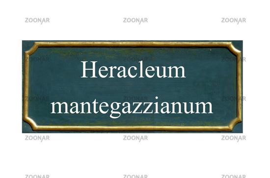 shield Heracleum mantegazzianum