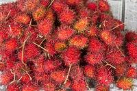Rambutan, Nephelium lappaceum