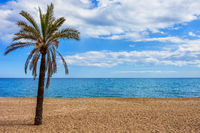 Single palm tree on sandy beach at Mediterranean Sea on Costa del Sol in Marbella