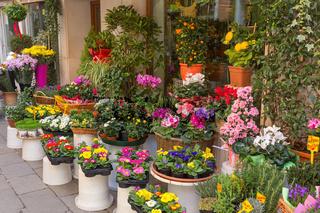Flowers outside of flower shop