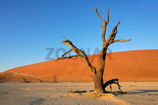 Tree and dune