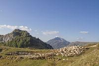 Flock of sheep in the Monte Baldo area