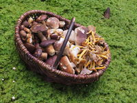 Mushroom basket with different types of mushroom