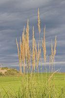 Sorrel in front of dark cloud sky