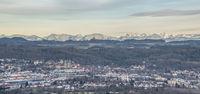 Weingarten with alpine panorama