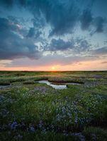 Norfolk salt marsh at low tide, North Norfolk, October