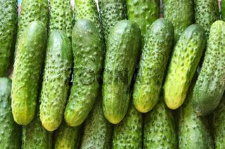 A lot of green cucumbers
