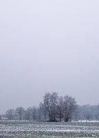 Baumgruppe im Nebel, Münsterland