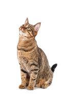 Big tabby cat in studio