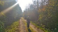 A senior Nordic walking on a forest road in the backlight of the sun