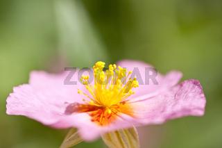 Blumenmakro detail of a flower