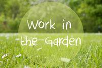 Gras Meadow, Daisy Flowers, Text Work In The Garden