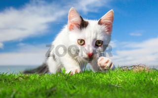beautiful kitten on green grass