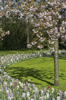 Frühlingsblumenarrangement in der Blumengartenschau Keukenhof
