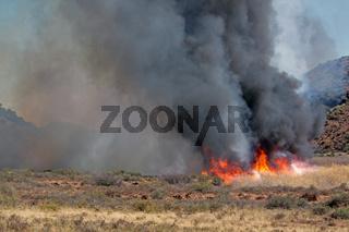 Brushfire