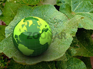 Green earth on leaf