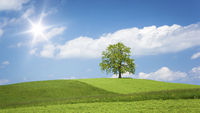 lonely tree on a hill