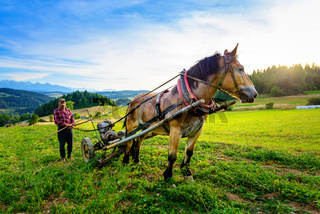 Sromowce Wyzne, Poland -  - August 27/2015; The farmer cultivates the soil with a horse in a mountainous area