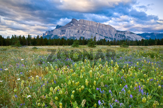 Mount Rundle and wild flowers, Banff National Park
