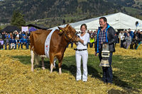 Cow Missy as winner of the Miss Red Holstein title, SWISSCOW Topschau Saanenland, Switzerland