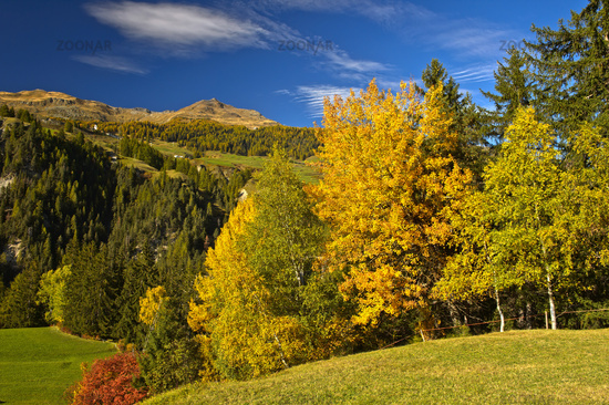 Landscape with deciduous forest in autumn leaf colors in the Engadine, Switzerland