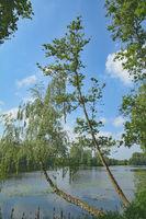 D--Niederrhein--Brüggen--Borner see.jpg