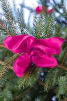 pink bow at fir tree
