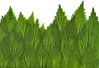 green leaves of Nettle