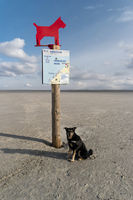 Dog Beach of St. Peter-Ording in Germany