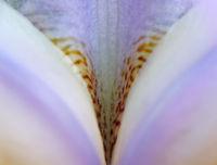Iris - Leaf Structures