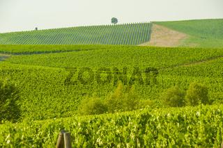 Weinberge in der Region Monteriggioni