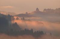 Golden morning Fog 4