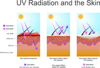 UV radiation and the skin.
