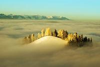 Landscape in morning fog 2