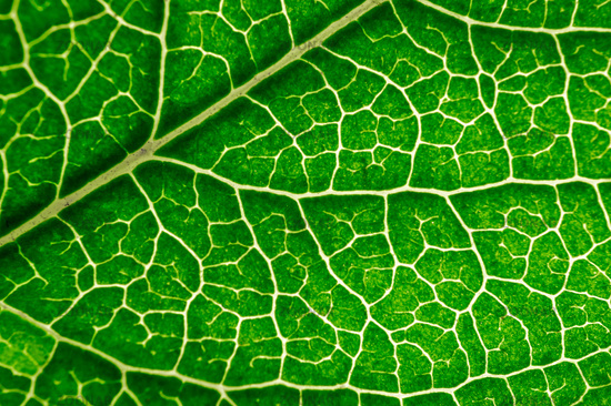 Close up leaf texture