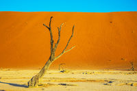 Picturesque ancient dried-up tree