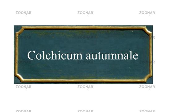 shield ,Colchicum autumnale