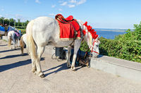 Decorated horses are on vacation