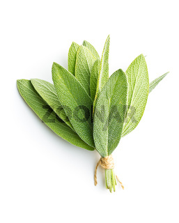 Salvia officinalis. Sage leaves.