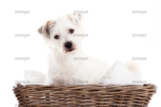 Sweet dog in basket