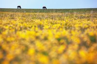 Silhouettes of two horses in the meadow
