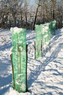 tree seedlings protected with green mesh